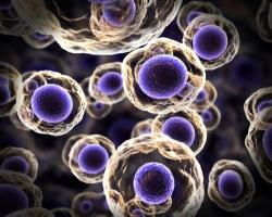 پروتئینهای تک یاخته